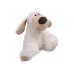 Hund Nico sucht neues Zuhause
