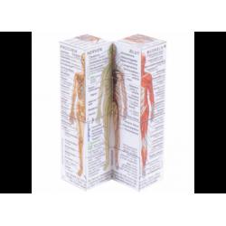 Anatomie - Menschliche Körpersysteme DE