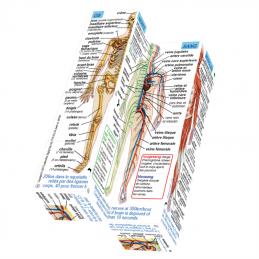 Anatomie - Menschliche Körpersysteme FR